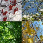 Татарские пословицы о природе, зиме, весне, лете, осени с переводом
