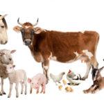 Названия домашних животных на татарском языке
