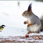 Названия диких животных и птиц  на татарском языке